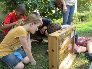 A demonstration hive, which you can catch at the preview events.