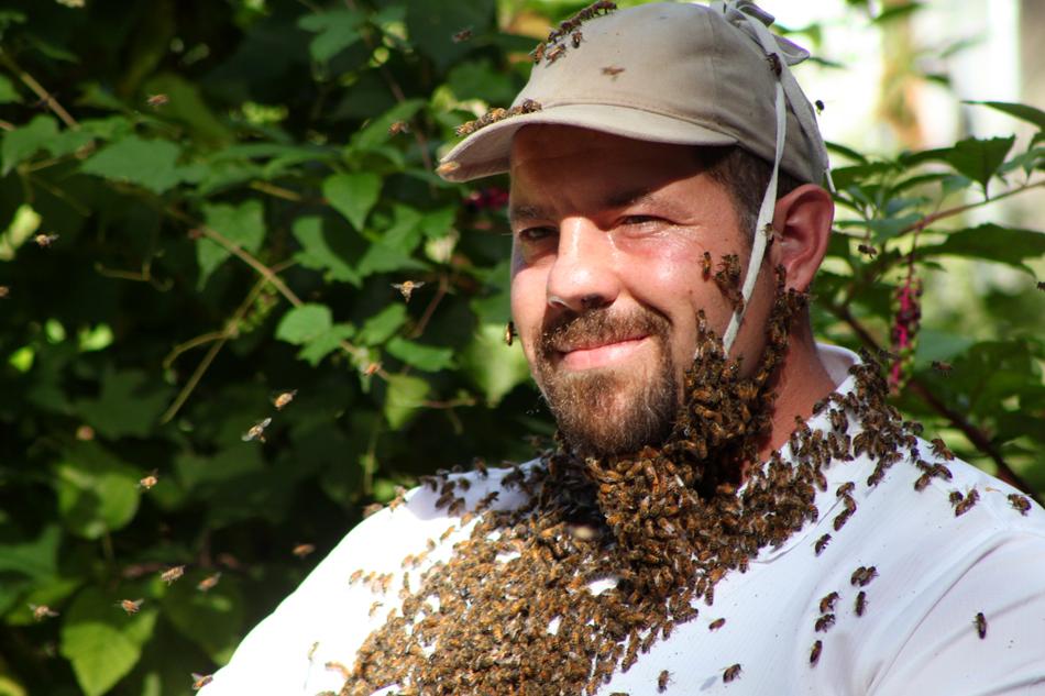 Don Bee Beard Plonski