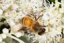 Bee 2 Geary