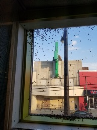 Bees on the window