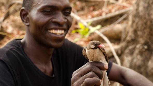 (c) Audubon Society