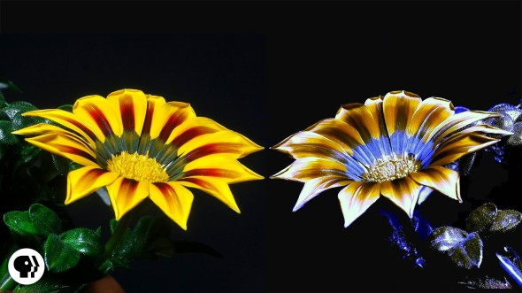 Flowers in UV