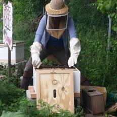 me beekeeping